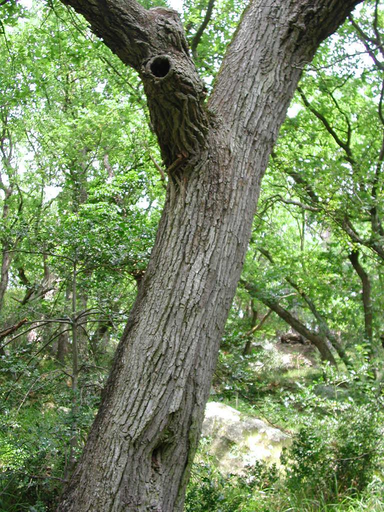 Cavité sur une branche